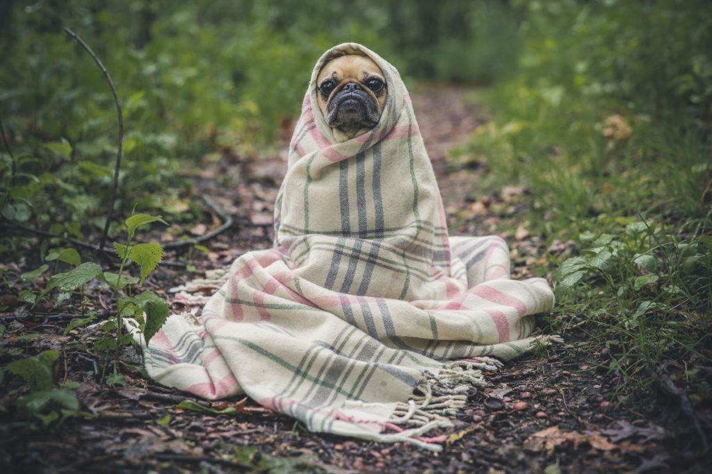 寝袋の耐久温度