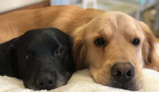 YouTubeデビューをしている愛犬の2匹